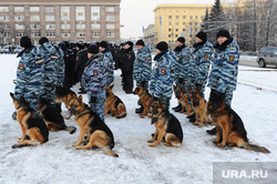 Полиция. Челябинск., кинологи, служебные собаки