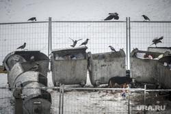 Антисанитарийный пустырь с собаками вместо Центрального рынка. Екатеринбург., помойка, мусорные баки
