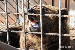 Контактный зоопарк. Челябинск., зоопарк, медведь