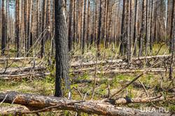 Разные фото (дорога и домики). Вижай, деревья, лес, сгоревший лес, поваленные деревья