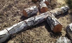 Поселок Придорожный. Кетовский район Курганской области , рубка леса, срубленные деревья