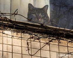 Клипарт. Москва. , колючая проволока, кошка, кот, неволя, окно