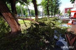 Клипарты. Челябинск., лужа, сломанные деревья, последствия урагана
