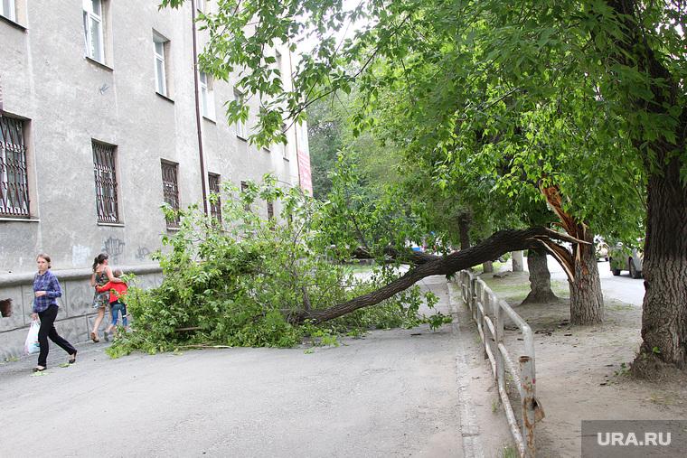 Упавшее дерево  Курган, дерево упало