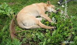 Клипарт. Челябинск, собака, газон, сми, журналисты