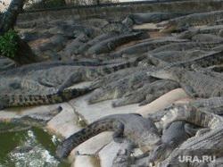 крокодилы в Тайланде