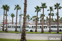 Сочи, маршрутное такси, транспорт, сочи, курорт, пальмы, автобус, общественный транспорт