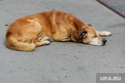 Места отдыха горожан (проблемы) Курган, бездомная собака