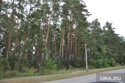Деревня Лукино, лес, кетово