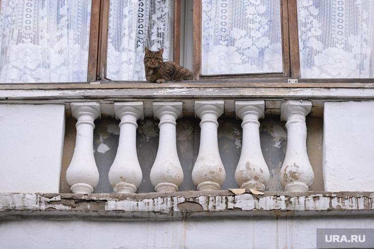 Балкона кусок. Челябинск., кошка, балкон
