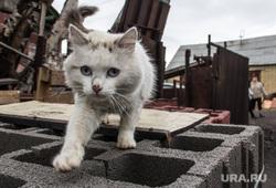 Клипарт. Челябинская область, кошка, бездомные животные
