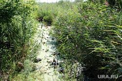 Свалки мусора Курган, мусор на природе, болото