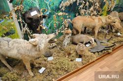 Озерск. Челябинская область., животные, экспонат