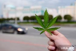 Озеленение. Екатеринбург