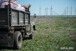 Денис Паслер в Белоярском городском округа: ферма, картофельное поле и заседание в доме культуры, поле, уборка урожая, сельское хозяйство