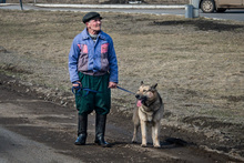 Клипарт. Пермь, пенсионер, собака, старик, домашние любимцы, домашнее животное