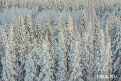 Горнолыжный комплекс «Хвойный Урман». Ханты-Мансийск, зима, зимний лес, снежные ели