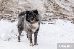 День оленевода. Салехард, ЯНАО, собака, чум, зима, лайка, холод