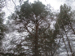 Белки в лесу, лес, деревья