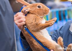 URA.Ru на пятом фестивале барбекю в ЦПКиО имени Маяковского. Екатеринбург, кролик, домашний питомец