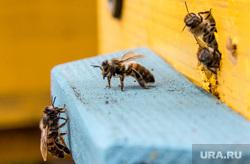 Клипарт. Челябинская область, пчелы, улей