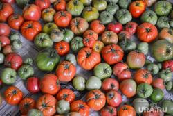 Урожай. Помидоры. Импортозамещение.  Челябинск., овощи, помидоры, урожай