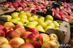 Мигранты, задержанные на 4 овощебазе. Екатеринбург, фрукты в ящиках, яблоки, продуктовый рынок