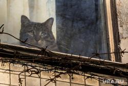 Клипарт. Москва. Ноябрь, колючая проволока, кошка, кот, неволя, окно