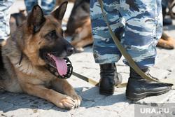 Полиция на Площади 1905 года. Екатеринбург, служебная собака, овчарка, кинологи