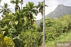 Шри-Ланка, джунгли