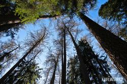 Клипарт new. Нижневартовск., деревья, лес, небо