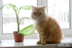 Многодетная семья Чернявских. Курган , окно, кошка, кот, домашние животные