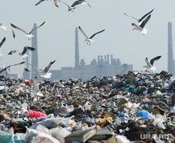 Свалка. Челябинск., мусор, полигон, чайки, свалка