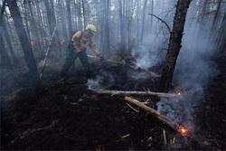 Открытая лицензия на 29.07.2015. Гасят пожар в лесу., пожар, лес