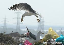 Свалка. Челябинск., мусор, полигон, чайка, свалка