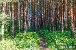 Рабочая поездка по городу. Екатеринбург, сосны, лес, деревья, тропинка