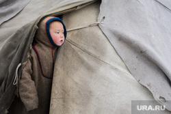ЯНАО. Тундра + досрочные выборы, ребенок, чум, ненцы, кмнс