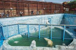 Животные в екатеринбургском зоопарке во время жары. Екатеринбург, зоопарк, белый медведь, вольера