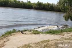 Учения спасателей МЧС Курган, кировский пляж