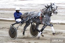 Ипподром. Екатеринбург, лошади, скачки, ипподром