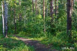 Пресс-конференция,  посвященную первому в мире конкурсу красоты среди лошадей. Екатеринбург, сосны, деревья, лес, лесная дорога
