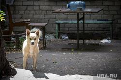 «Металлургмаш». Магнитогорск, стол, бутылка, дворняга, пес, собака, металлургмаш