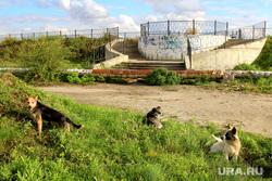 Набережная реки Тобол Курган, бродячие собаки, набережная тобола, главный вход