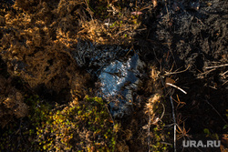 Нарушения на Тяновском месторождении. Сургут, загрязнение среды, нефть, нефтеразлив