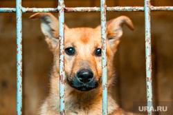 Щенок собаки. Пермь, собака, бездомные животные, щенок, решетка, клетка