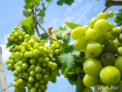 Крым., фрукты, виноград