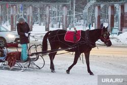 Вечерний город. Ханты-Мансийск., лошадь, повозка