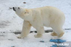 Челябинский зоопарк. Животные.Челябинск., белый медведь, алтын, животное, хищник, зверь, млекопитающее