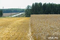 Дубровский и пшеница Челябинск, поле, пшеница, урожай, нива, жнивье, стерня