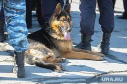 Демонстрация Челябинск, полиция, собака